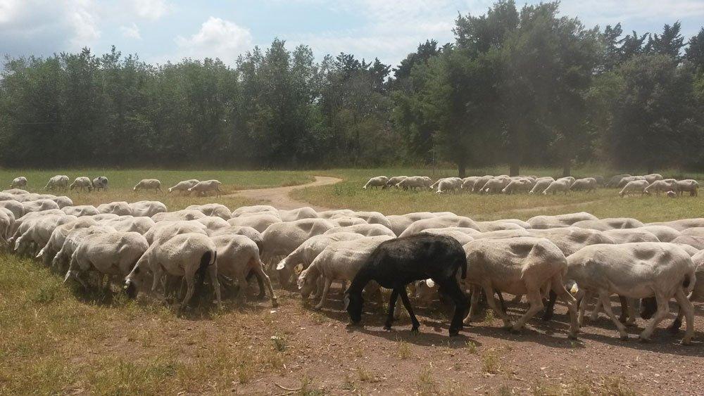 Valle della Caffarella, Parco Regionale dell'Appia Antica